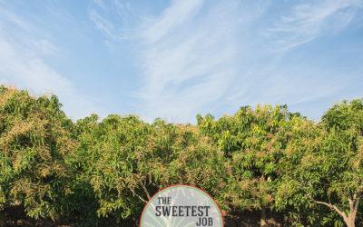 The Sweetest Job Northern Territory