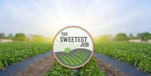 The Sweetest Job Logo & Image